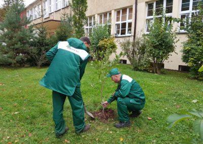 pielęgnacja drzew