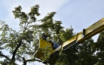 Pielęgnacja i wycinka drzew rozpoczęta