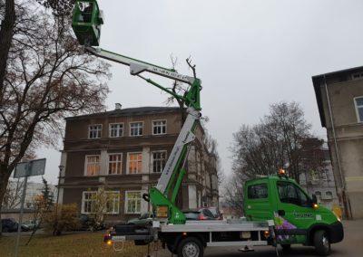 pielęgnacja drzew 2