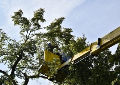 pielęgnacja drzew 3