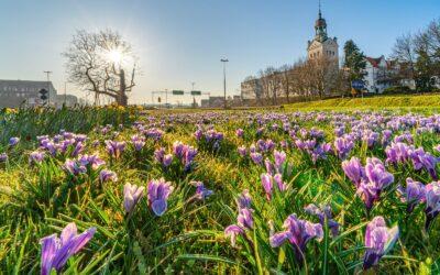 Dbamy o piękną wiosnę w Szczecinie
